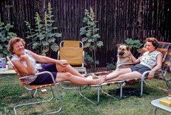 Yardbirds: 1950