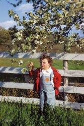 Junior Gardener: 1952