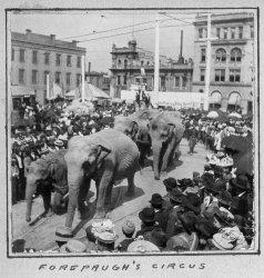 Forepaugh's Circus: 1901
