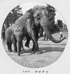 The Baby: 1901