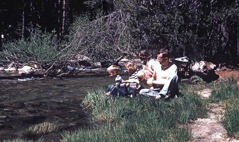 Sequoia: 1953