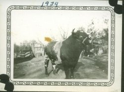 Even the Bull Posed