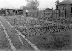 Cactus Garden: c. 1940