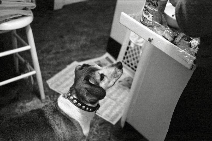 Doggie Dinner: 1963