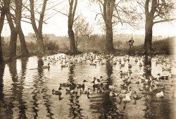 Duck Pond 1912