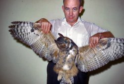 Man With Owl