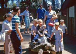 Tortoise and the Heirs: 1950s