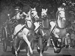 Last run of DCFD fire horses Barney, Gene and Tom