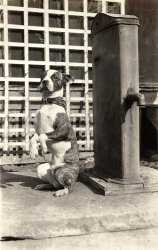 Mike the Ex-Junk Yard Dog: 1930