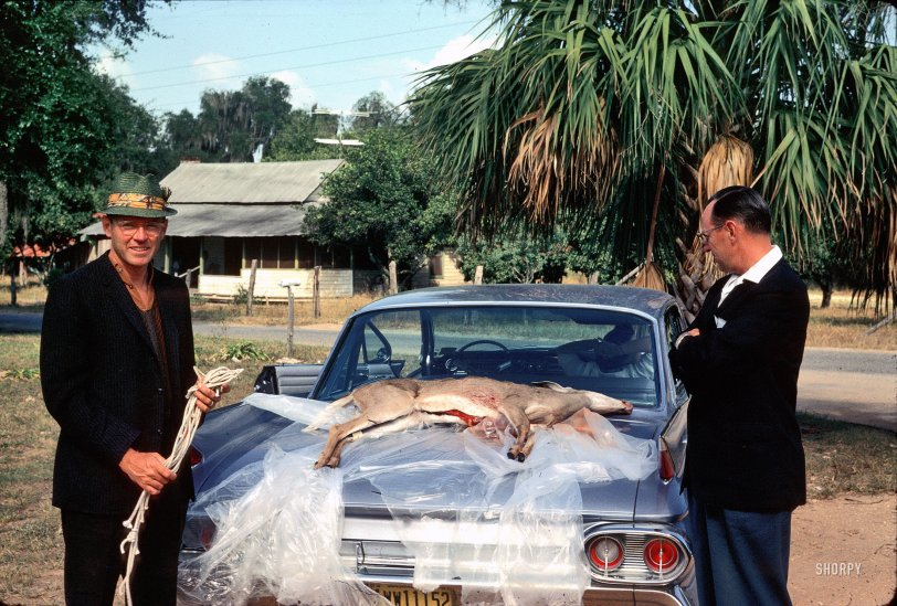 Bambi and the Cadillac: 1961