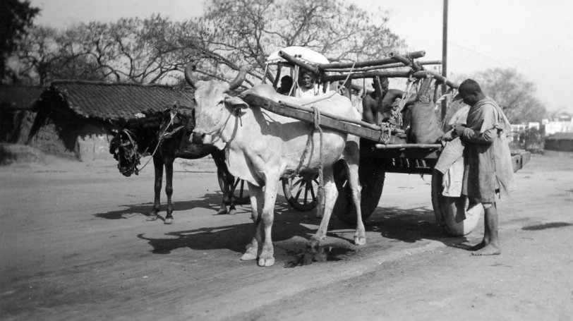 Oxcart India: 1939