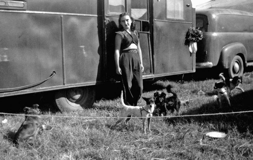 Dog Act: 1954