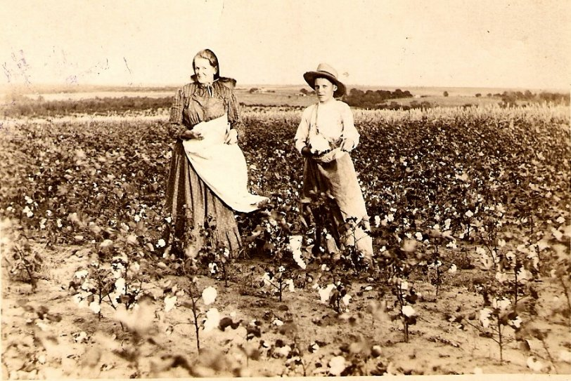 Pickin' Cotton In Oklahoma, 1895