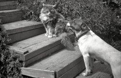 Top Cat: 1948