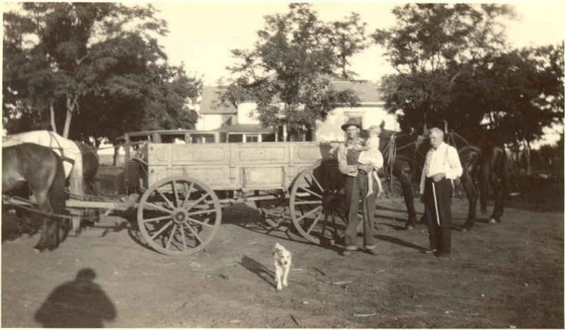 Horse, wagon and dog